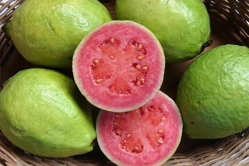 Nuevas de la guayaba y otras plantas medicinales (+ Fotos e Infograf�as)