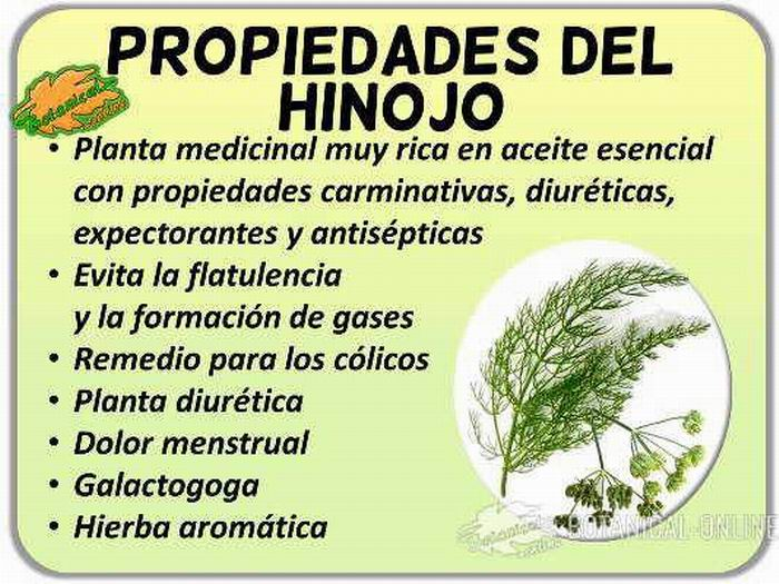 Hinojo: para la cocina y la salud
