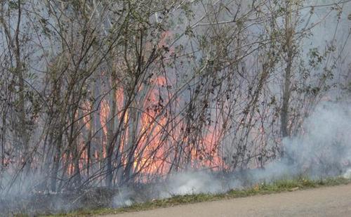 Sin control incendio forestal en foco primario. Foto Cortesía del Cuerpo de Guardabosques