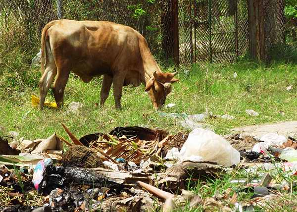 La contaminación medioambiental afecta a la fauna