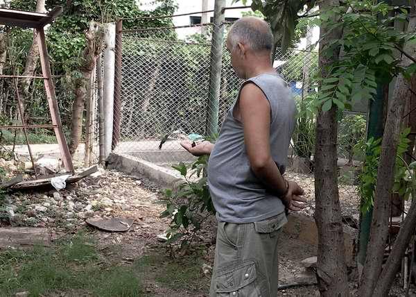 Pastor y los zunzunes en su patio