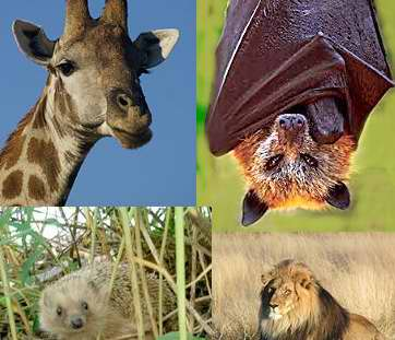 ¿Por qué los mamíferos tienen pelo?