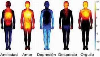 Crean un mapa corporal de las emociones