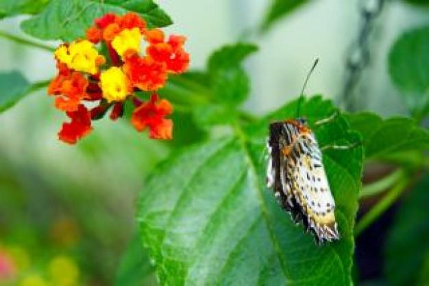 Para alargar la vida, lo mejor es estar cerca de la naturaleza