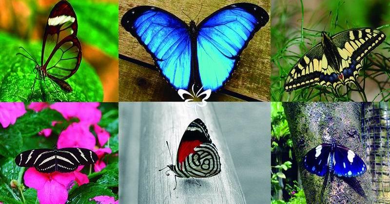 El mundo alado de las mariposas
