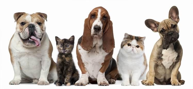 La Covid-19 y las mascotas