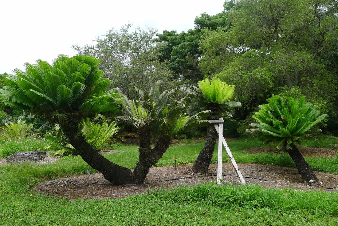 Las 50 plantas más amenazadas de Cuba