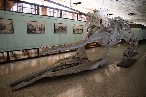 Reabrirá sus puertas el Museo de Ciencias Naturales Tomás Romay