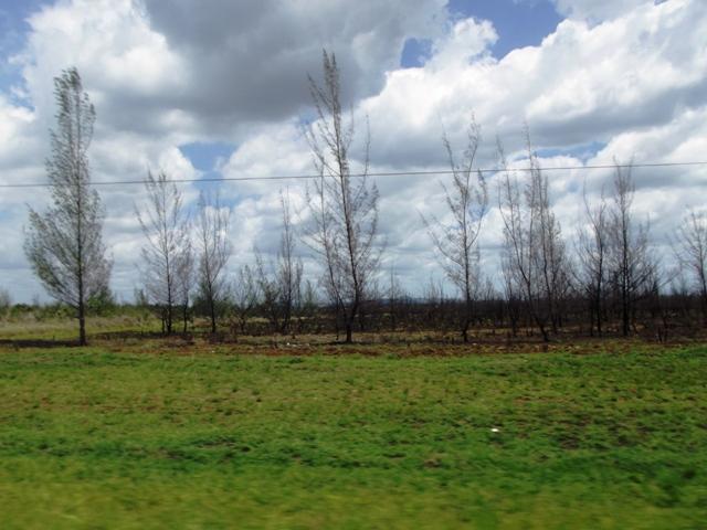 Medio Ambiente y Desarrollo Sostenible en Camagüey
