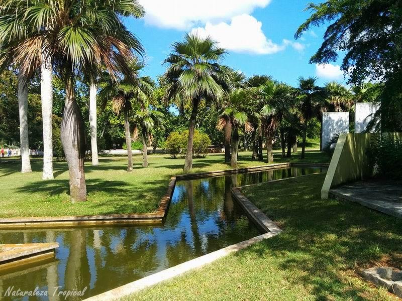 Si quiere conocer m s sobre las palmas - Jardin botanico las palmas ...