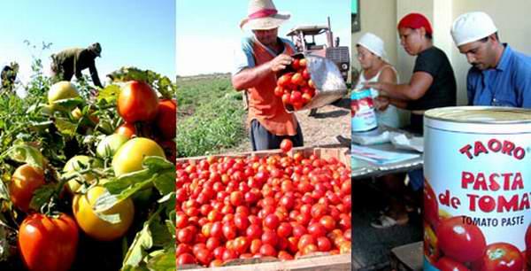 Schema Elettrico Per Tabellone Segnapunti : Circuito productivo del tomate imagenes
