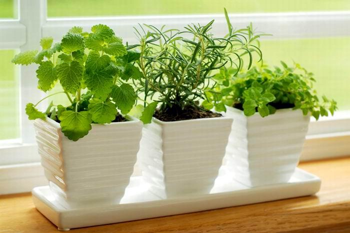 Para purificar el aire las plantas - Enfermedades de las plantas de interior ...