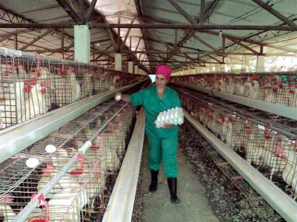 Para Nerelys Pena, la avicultura es su vida misma