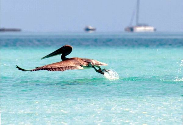 Reconocen logros de Cuba en protección de la biodiversidad