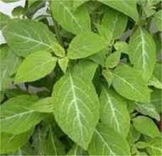 acido urico en la planta delos pies alimentos con acido urico elevado