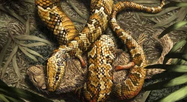 F�sil de serpiente podr�a ser ancestro de culebras modernas