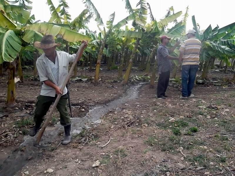 Evalúan medidas de enfrentamiento a la sequía