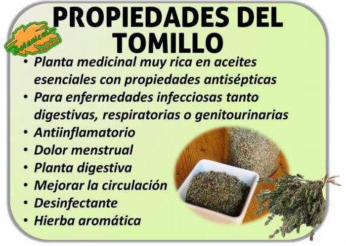 Tomillo excelente sazonador for Manzanilla planta medicinal para que sirve