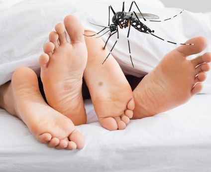 Realizan nuevo hallazgo en torno al Zika