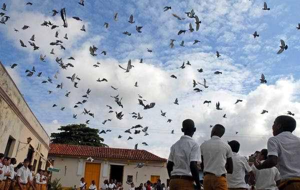 20 mil palomas en el cielo cubano. Foto Rodolfo Blanco
