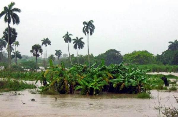 Lluvias asociadas a la tormenta tropical Colin provocan inundaciones. Foto: Ronald Suárez