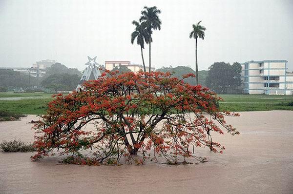 Lluvias en Pinar del Río. Foto: Alejandro Rosales
