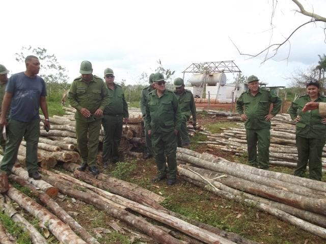 Los árboles derribados se convierten en horcones y otros elementos para la construcción de viviendas en comunidades rurales.