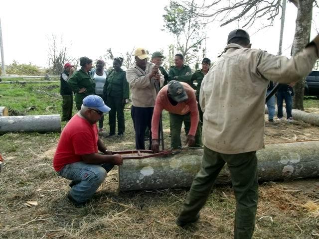 Comenzó el corte de tablas de palma para construir viviendas en zonas rurales.