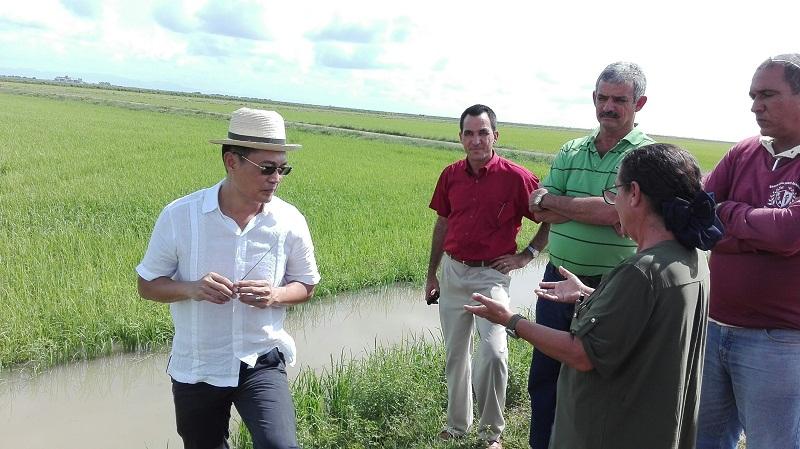 Hemos logrado rendimientos superiores a 1.43 hectáreas por encima de otras áreas que no forman parte del proyecto