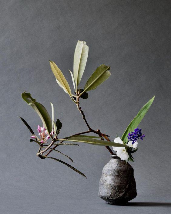 Cinco días para el bonsái