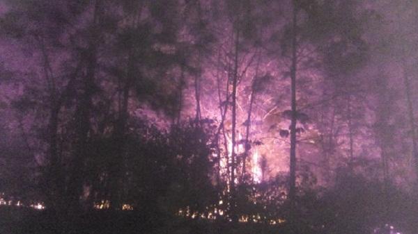 Bajo control incendio forestal en Guane, Pinar del Río