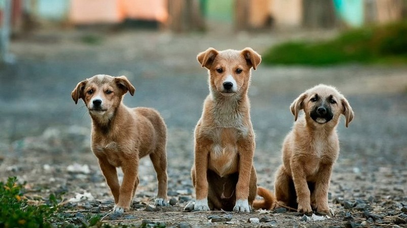Cuban Ministry of Agriculture issues statement on protection and care of animals in the country