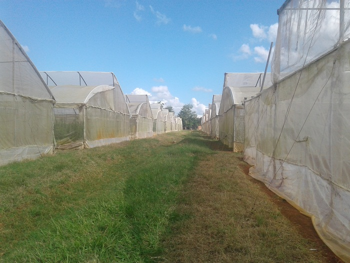 Potencian cultivos protegidos en Mayabeque