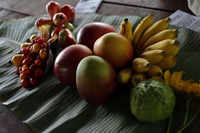 Rubrican en Cuba proyecto para fortalecer cadenas de frutales