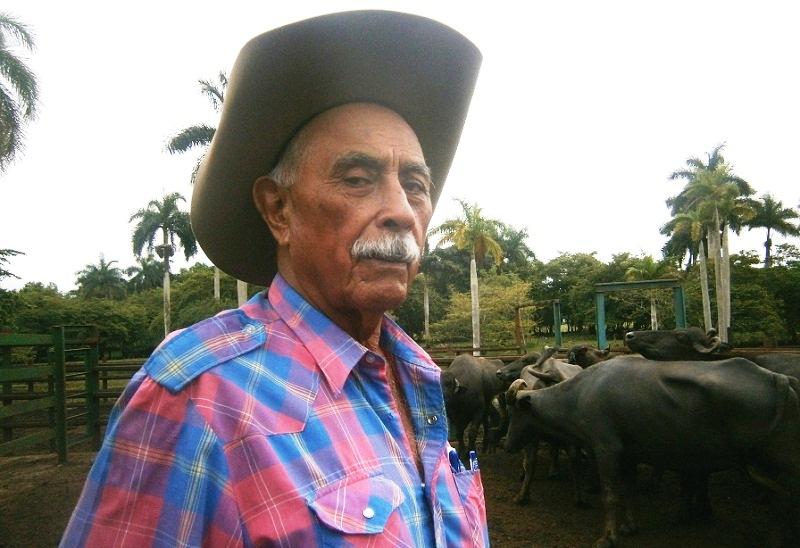 El cienfueguero José Atienza, una vida de ganadero