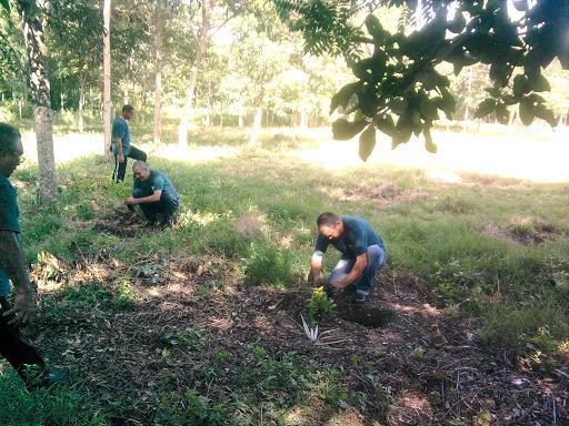 Por primera vez por encima del 80 % del logro de plantación (+Audio y Fotos)
