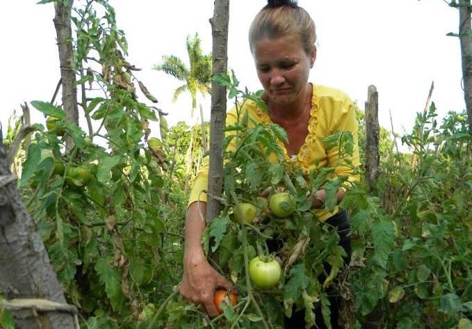Destacan papel de la mujer rural en Ciego de Ávila