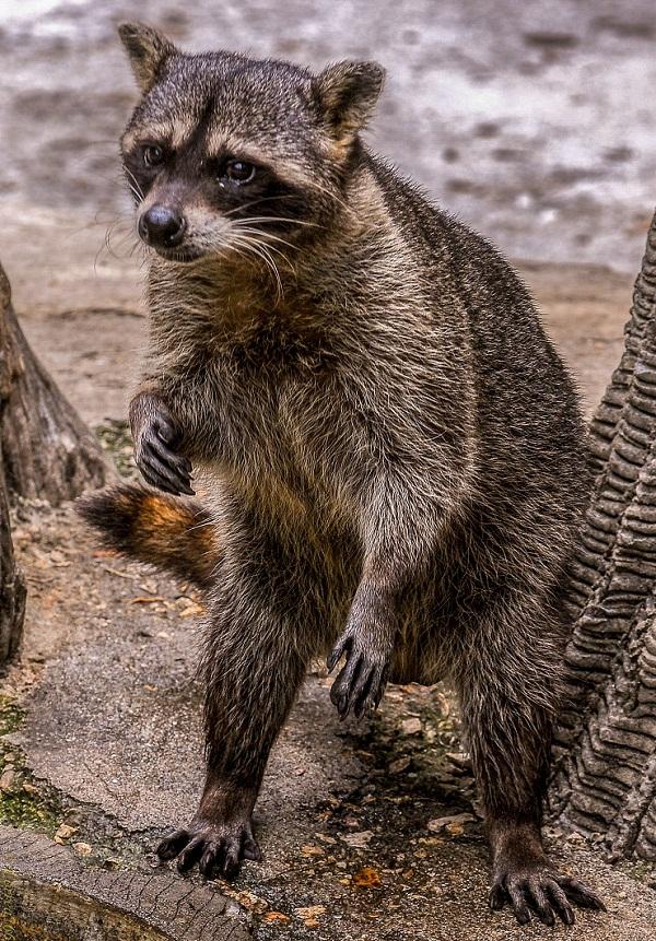 Zoológico de 26, el más antiguo de Cuba