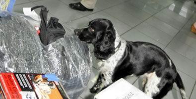 El empleo operativo de los canes es un medio eficaz para enfrentar actividades de narcotráfico. Foto: Roberto Suárez