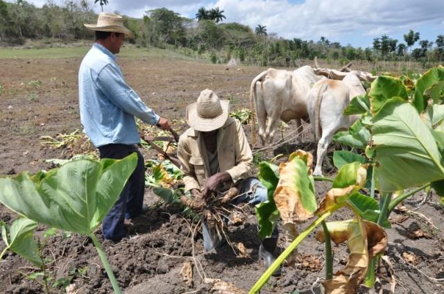 La producción desde la siembra y el cultivo, la higienización protegiendo el medio ambiente.