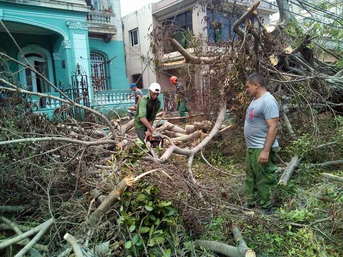 Brigadas Forestales de Mayabeque y Pinar del Río apoyan recuperación en La Habana. Fotos: Carlos Serpa