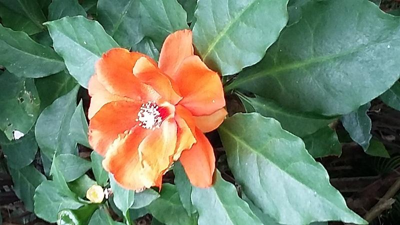 Un Festival para los Cactus y otras suculentas, en el Jardín Botánico Nacional