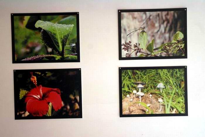 Sus sorprendentes e inusuales interpretaciones de la rica flora nacional -en particular las flores y las frutas. Fotos: Lucía Sanz