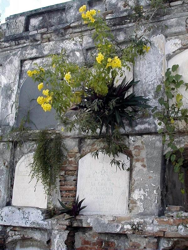 Nichos verticales del Cementerio de Reina de Cienfuegos. Foto: Mireya Ojeda