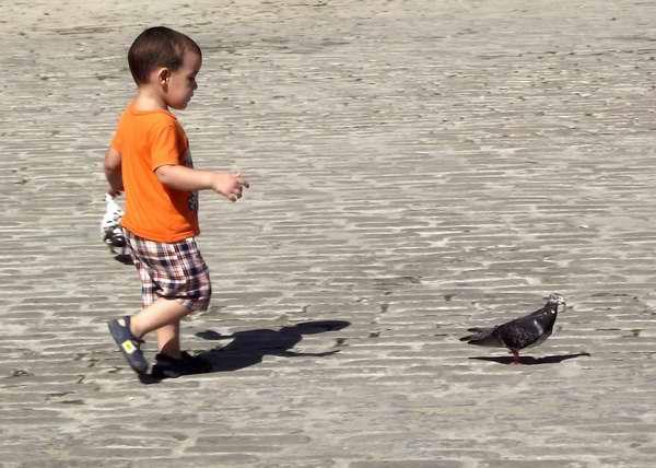 Los niños se sienten atraído por estas aves tan gráciles