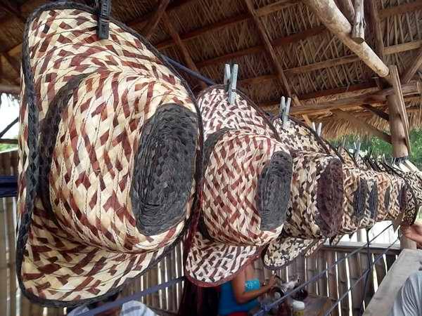 Los sombreros de anacahuita del Yunque. Foto Juan Manuel Olivares