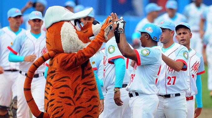 Tigres pintan tres rayas en Camagüey