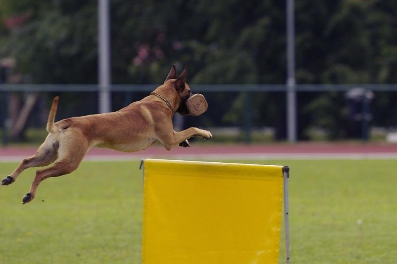Próximo campeonato internacional de razas caninas en La Habana