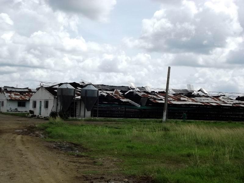 Naves avícolas en el municipio de Minas severamente dañadas por el huracán Irma.