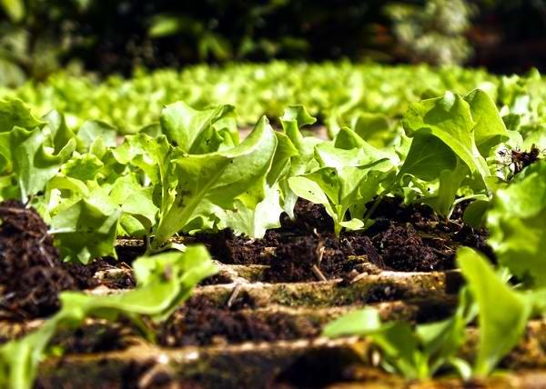 Reconoce la FAO esfuerzos de Cuba para proteger los suelos